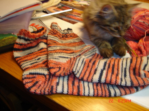 Coco_and_the_tiger_socks